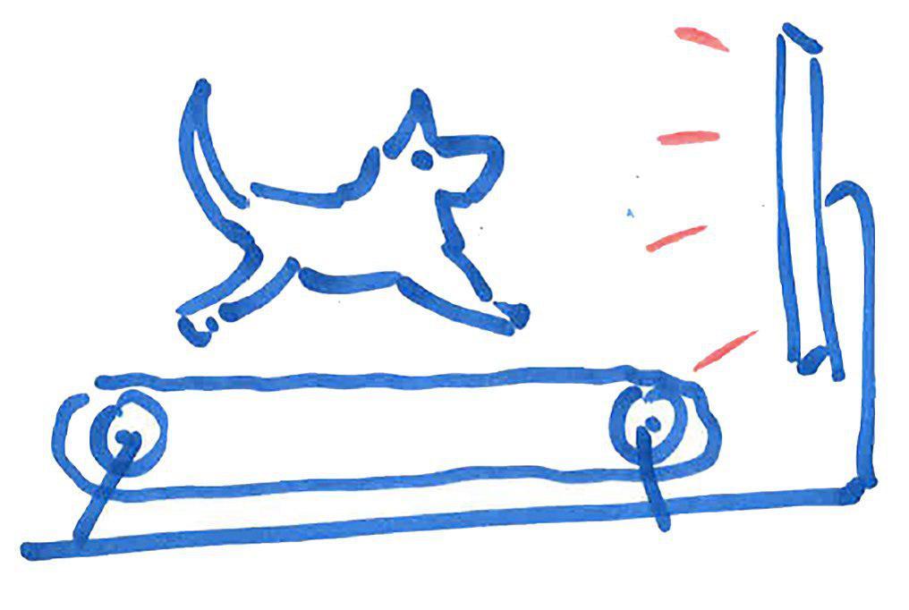 На пороге нового открытия: финские ученые создают интернет для собак 3