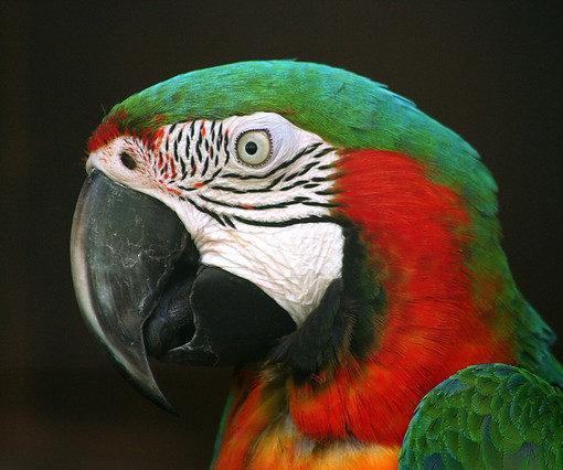 Попугаи рассуждают сложным методом исключения 10