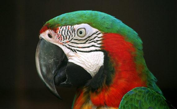 Попугаи рассуждают сложным методом исключения 7