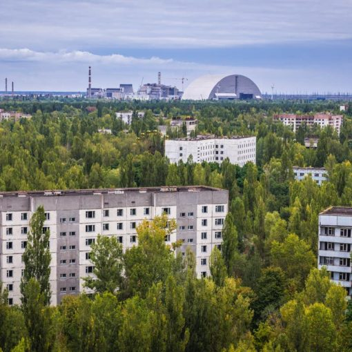 Как растительность сумела выжить в Чернобыле? 13