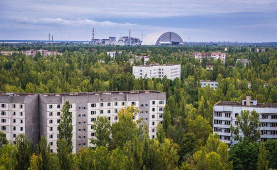 Как растительность сумела выжить в Чернобыле? 8
