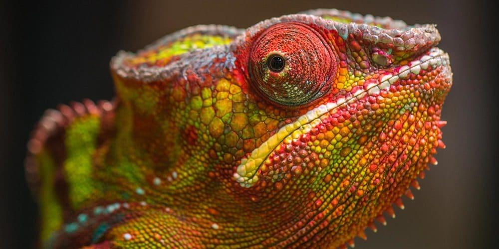 Создан материал, меняющий цвет подобно хамелеону, работающий на наномашинах 2