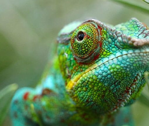 Создан материал, меняющий цвет подобно хамелеону, работающий на наномашинах 8
