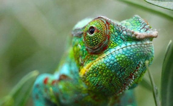 Создан материал, меняющий цвет подобно хамелеону, работающий на наномашинах 11