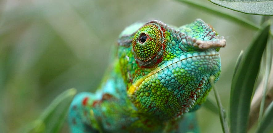 Создан материал, меняющий цвет подобно хамелеону, работающий на наномашинах 1