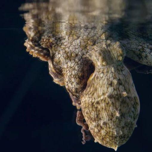 Что снится осьминогам? Мы не знаем — но со стороны выглядит завораживающе 5