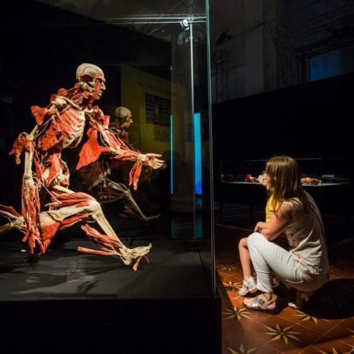 Выставка пластинированных человеческих тел в Киеве 15