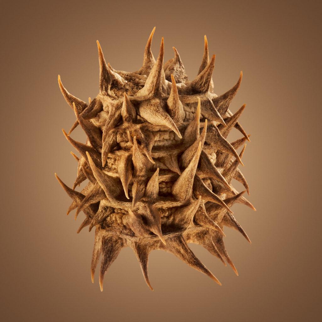 Удивительные детали экзотических семян под микроскопом 10