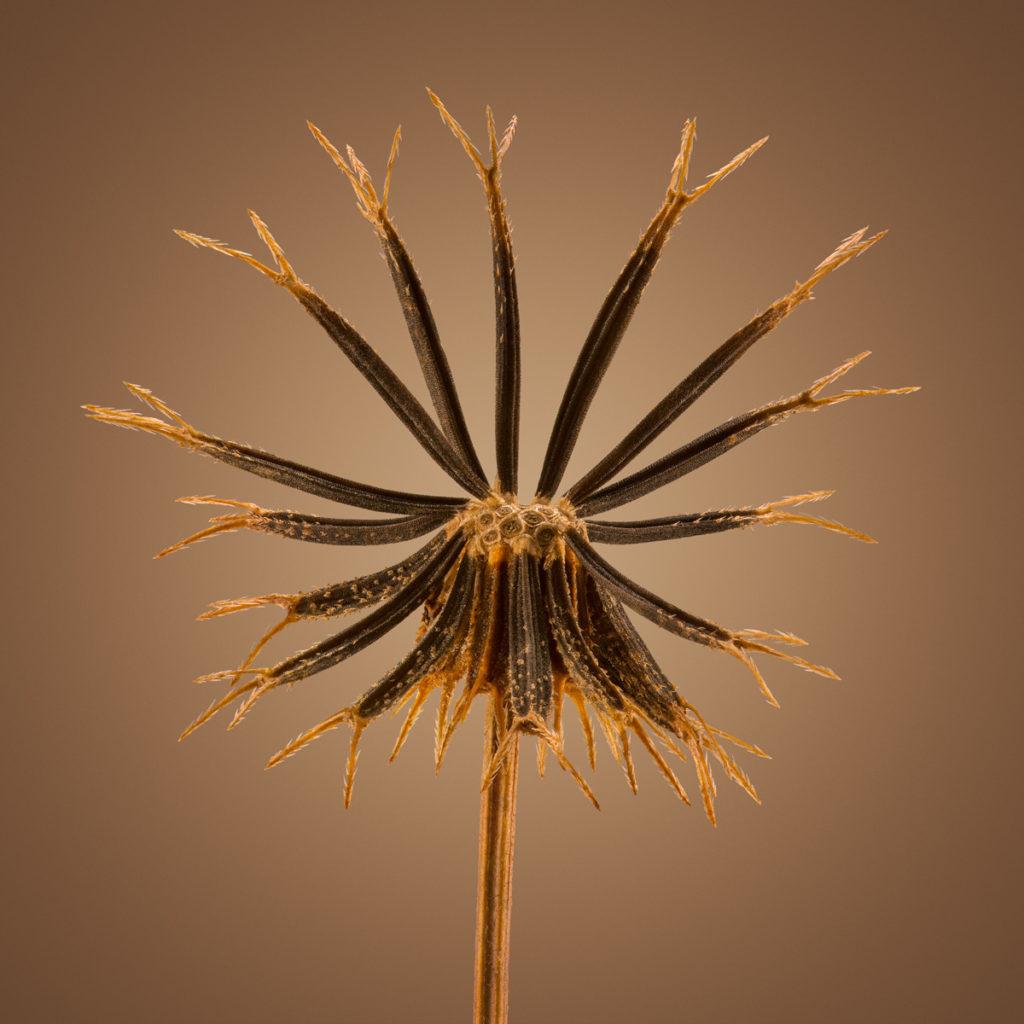 Удивительные детали экзотических семян под микроскопом 6