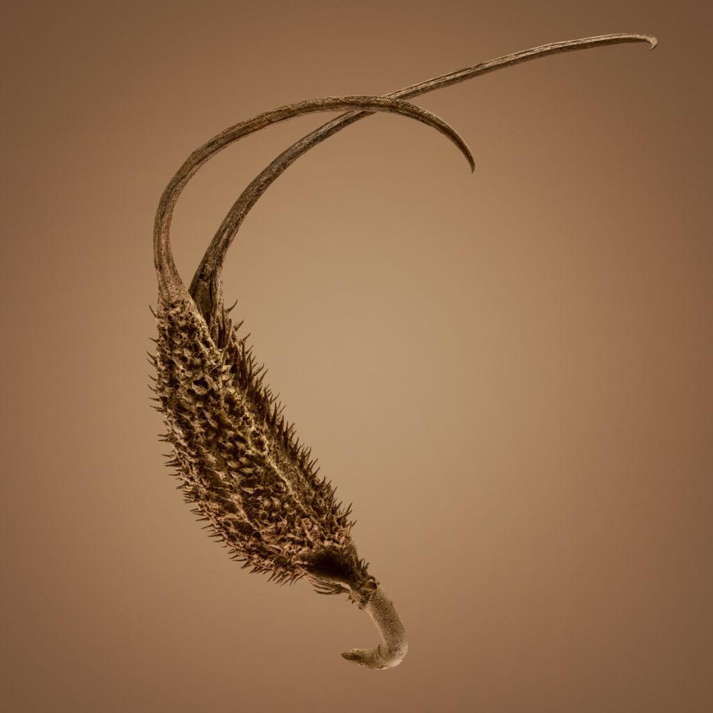 Удивительные детали экзотических семян под микроскопом 2